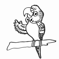 cute budgerigar and coloring