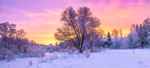 winter panorama landscape with forest, trees covered snow and sunrise.