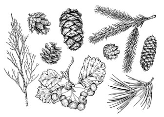 Set of different branches  and cones. Fir tree, cedar, pine, thuja, hawthorn. Hand drawn sketch. Vector illustration. Collection of Christmas decorative items.