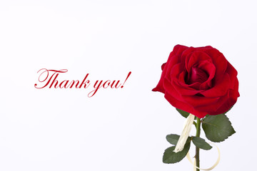 Single red rose on the wthite thank you card
