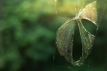 Spider Web (Cobweb) in Nature , Network or Animal Life Concept