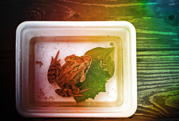 Frog in the box