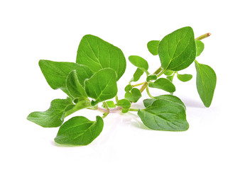 fresh oregano herb on white background