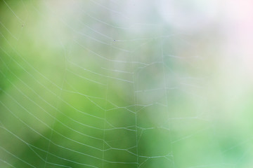 Cobweb in front of blurry green background