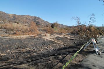 Remains of a fire burned landscape