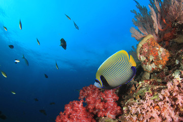 Underwater fish on coral reef in ocean