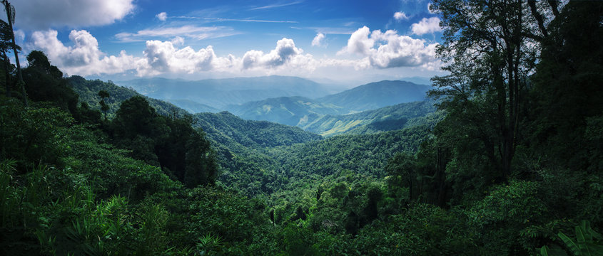 mountain forest on the Doi Phuka lush green tropical forest covered in low cloud during rainy monsoon season in Nan Province, Thailand