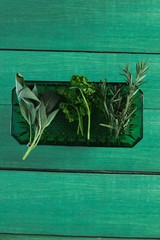 Various type of herbs in plastic tray