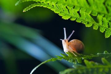 Fototapeta Close up photography of snail in nature obraz