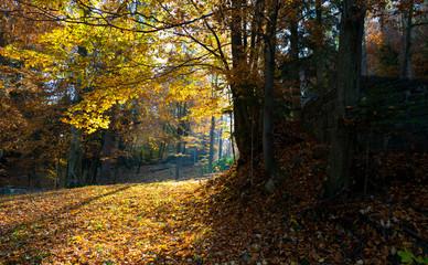 Autumn sunrise scene in a forest in Eastern Europe Romania