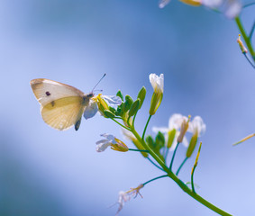 Macro photography of butterfly in nature