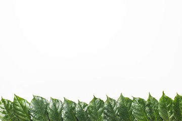 Green leafs frame with usable copy space in the middle and white background.