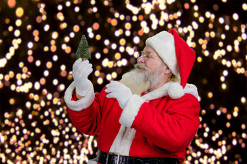 Santa Claus looking on little Christmas tree. Santa Claus holding cute little artificial green spruce on festive lights background.