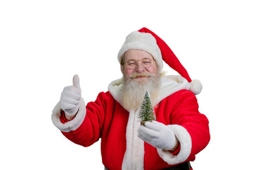 Gesturing Santa Claus on white background. Portrait of Santa Claus holding little decorative Christmas tree and giving thumb up, isolated on white background.