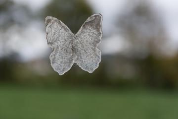 Schmetterling Dekoration auf grünem Hintergrund