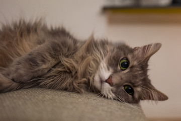 Cute cat on couch