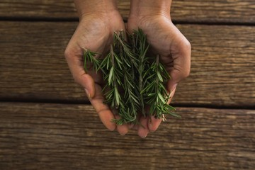 Hands holding rosemary leaves against wooden table