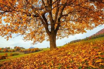 A beautiful deciduous tree in the foreground of the autumn landscape, National Nature Reserve Sulov Rocks, Slovakia, Europe.