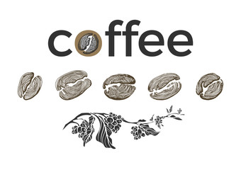 Set of coffee branch, beans on white background. Vector collection. Sketch