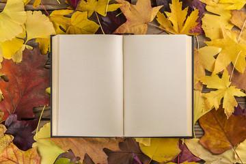 Libro vuoto su sfondo di foglie
