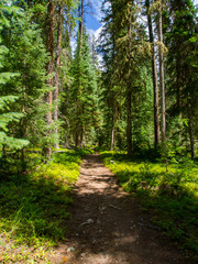 Trail Through Rocky Mountain Forest