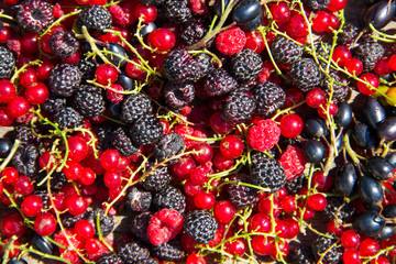 Fresh berries of blackberries, raspberries, red currant and blackcurrant for background