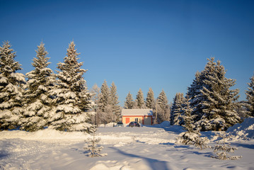 Winter Christmas picture with snow covered trees and house