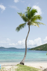 jost van dyke lonely palm tree