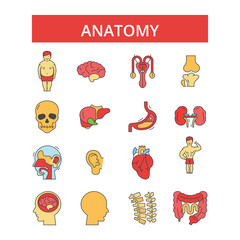 Anatomy illustration, thin line icons, linear flat signs, outline pictograms, vector symbols set, editable strokes