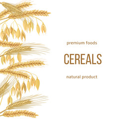 Wheat, barley, oat and rye set. text premium foods, natural product. Four cereals grains with ears, sheaf