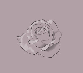 Rose Flower Monochrome Drawing For Coloring Book Hand Drawn Simple Style Illustration