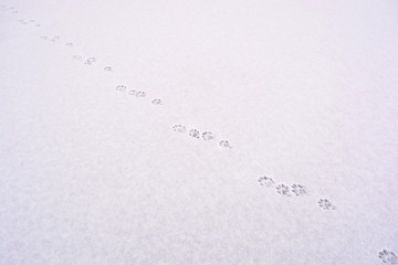 Photo of animal tracks on the snow in winter