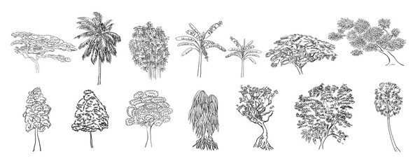 Drawing set of tree on white background