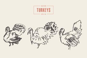 Set turkeys drawn vector illustration, sketch