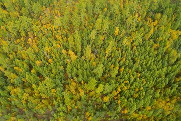 aerial shot of colorful autumn forest landscape