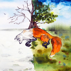 foxes. summer and winter. picture