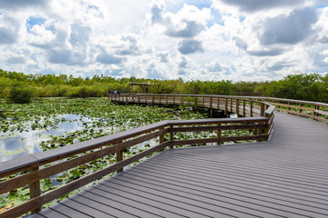 Anhinga Trail of the Everglades National Park. Boardwalks in the swamp. Florida, USA.