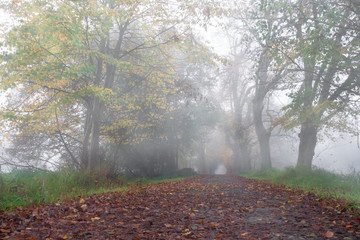 Allee im Herbst Wald mit Nebel