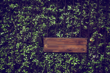 Empty wooden signage isolated in green nature tree bushes background
