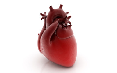 3d rendered human heart isolated on white background