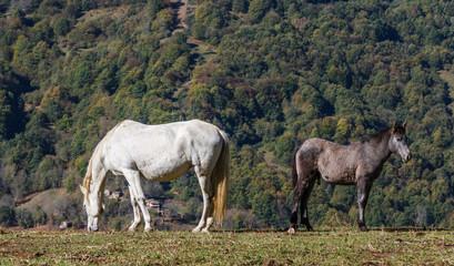 Yegua y potro en pradera de montaña.
