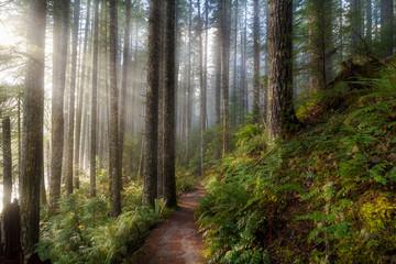 Sun Beams along Hiking Trail in Washington State Park USA America