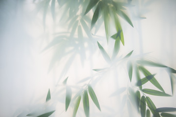 Papiers peints Bamboo Green bamboo in the fog with stems and leaves behind frosted glass