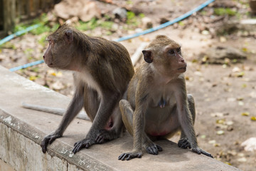 Monkeys on stone wall in garden.Thailand.