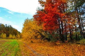 A beautiful autumn landscape. Autumn forest after rain