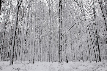 Snow-covered trees plants forest.