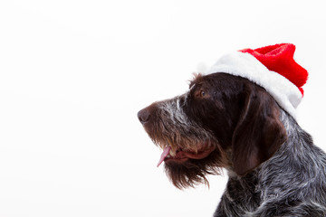 Black dog in santa outfit