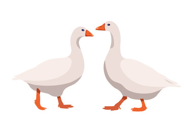 Pair of geese isolated on white background, geese couple in flat style