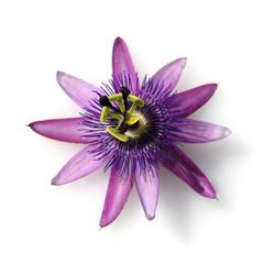 Passionsblume, Passiflora Violacea, Violette, Heilpflanze