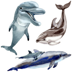 Dolphin wild mammals in a watercolor style isolated. Full name of the mammals: Dolphin. Aquarelle wild mammals for background, texture, wrapper pattern or tattoo.